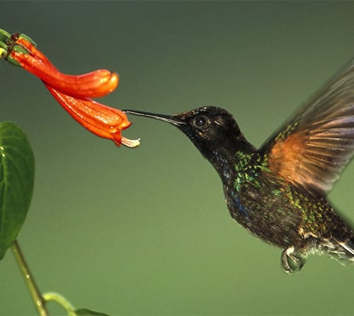 Use the Google Hummingbird update to boost your web traffic